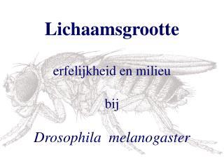 Lichaamsgrootte erfelijkheid en milieu bij Drosophila  melanogaster