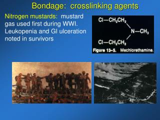 Nitrogen mustards:   mustard gas used first during WWI.  Leukopenia and GI ulceration noted in survivors