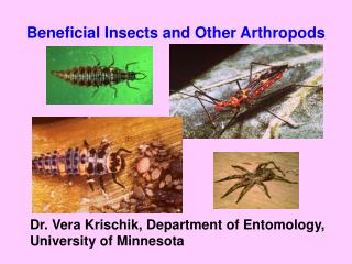 Beneficial Insects and Other Arthropods