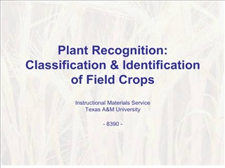 Plant Recognition: Classification  Identification of Field Crops