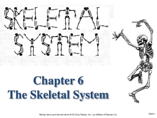 The Skeletal System II