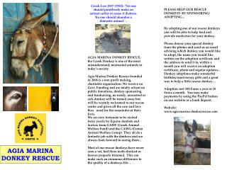 AGIA MARINA DONKEY RESCUE, the Greek Donkey is one of the most misunderstood, mistreated animals in today's society.