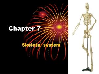 Bone Classification