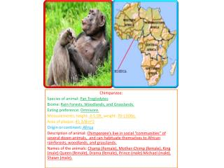 Chimpanzee: Species of animal:  Pan Troglodytes Biome:  Rain Forests, Woodlands, and Grasslands.  Eating preference:  O