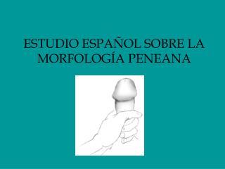 ESTUDIO ESPAÑOL SOBRE LA MORFOLOGÍA PENEANA