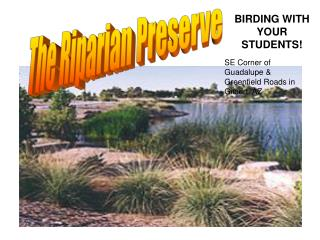 The Riparian Preserve