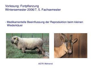 Vorlesung: Fortpflanzung Wintersemester 2006/7, 5. Fachsemester - Medikamentelle Beeinflussung der Reproduktion beim kl