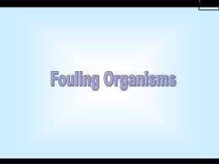 Fouling Organisms