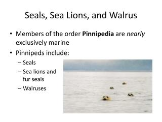 Seals, Sea Lions, and Walrus