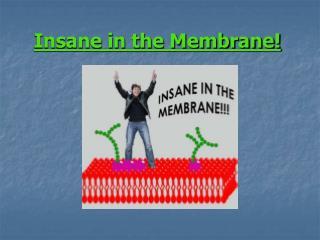 Insane in the Membrane!
