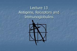Lecture 13 Antigens, Receptors and Immunoglobulins