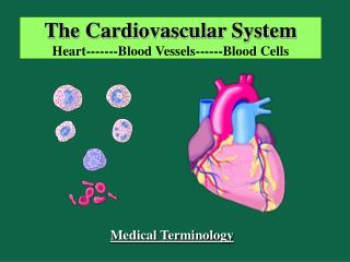 The Cardiovascular System Heart-------Blood Vessels------Blood Cells