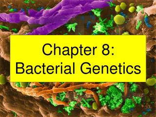 Chapter 8: Bacterial Genetics