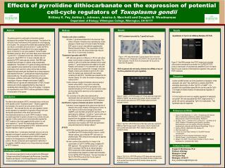 Effects of pyrrolidine dithiocarbanate on the expression of potential cell-cycle regulators of  Toxoplasma gondii