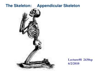The Skeleton:     Appendicular Skeleton