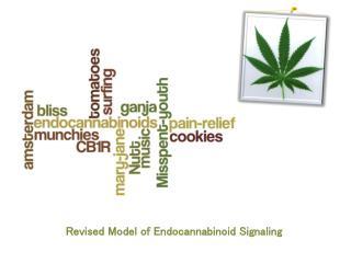 Revised Model of Endocannabinoid Signaling