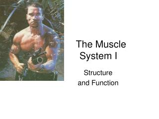 The Muscle                System I