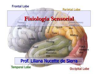 Fisiolog�a Sensorial