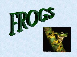FROGS