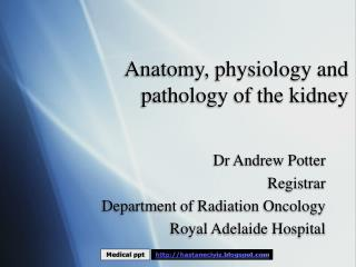 Anatomy, physiology and pathology of the kidney