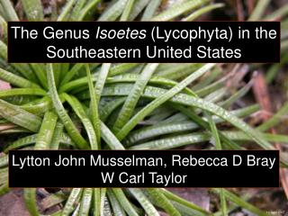 The Genus Isoetes Lycophyta in the Southeastern United States
