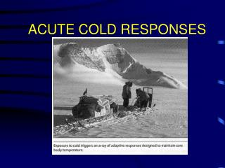 ACUTE COLD RESPONSES