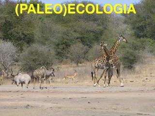 (PALEO)ECOLOGIA