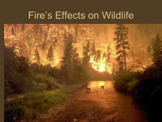 Fire's Effects on Wildlife