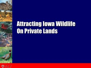 Attracting Iowa Wildlife On Private Lands