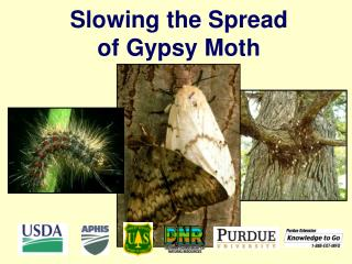 Slowing the Spread of Gypsy Moth