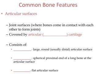 Common Bone Features