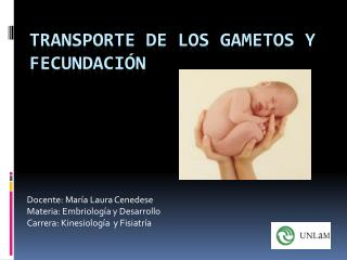 Transporte de los gametos y fecundación