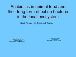 Antibiotics in animal feed and their long term effect on bacteria in the local ecosystem