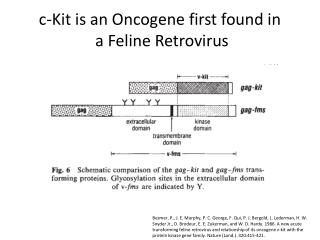 c-Kit is an Oncogene first found in  a Feline Retrovirus