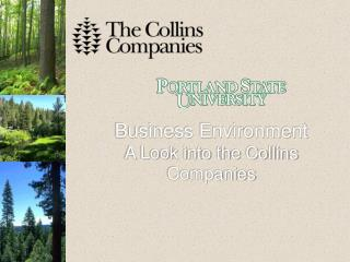Business Environment A Look into the Collins Companies