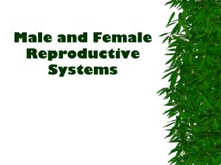 Male and Female Reproductive Systems