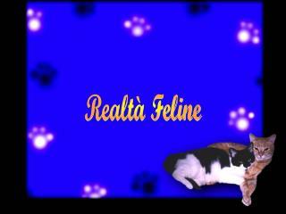 Realtà Feline