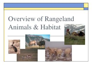 Overview of Rangeland Animals & Habitat