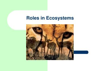 Roles in Ecosystems