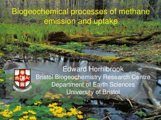 Biogeochemical processes of methane emission and uptake