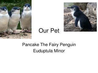 Our Pet