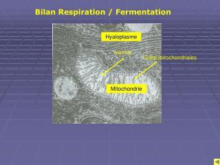 Bilan Respiration / Fermentation