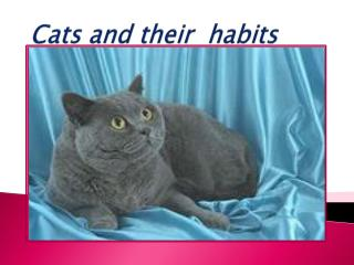 Cats and their  habits
