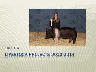 Livestock Projects  2013-2014
