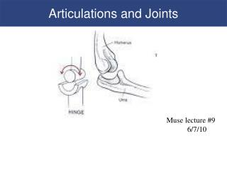 Articulations and Joints