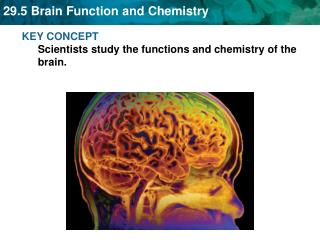 KEY CONCEPT  Scientists study the functions and chemistry of the brain.
