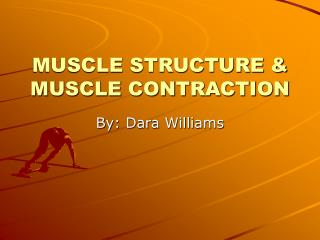MUSCLE STRUCTURE & MUSCLE CONTRACTION