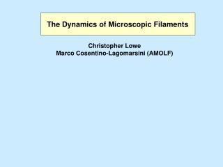 The Dynamics of Microscopic Filaments
