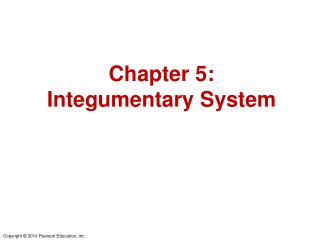 Chapter 5: Integumentary System