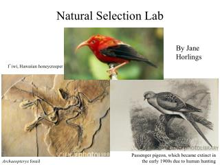 Natural Selection Lab